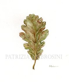 original 7x9  watercolour  oak leaf  .. not by happyapplebumblebee,