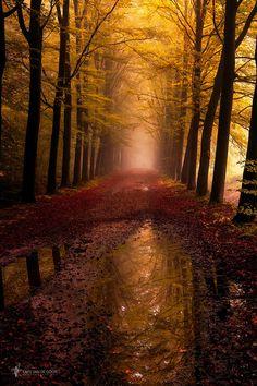 ~~Autumn reflections by Lars van de Goor~~