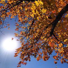 ☀️ #minnesota #mn #exploremn #fall #autumn