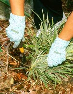 Controlling weeds in flower beds
