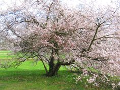 Frühling im Park Sanssouci in Potsdam