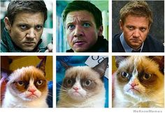He is the Grumpy Cat.