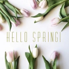 Hello Spring Tulips Pictures, Photos, and Images for Facebook ...
