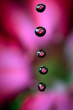 macro photography tips Macro Photography Tips, Water Photography, Street Photography, Dew Drops, Rain Drops, Water Pictures, Fotografia Macro, Water Art, Water Droplets