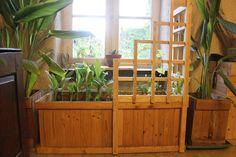 Modern Homesteading Winter Garden: Low Cost, Low Effort, Self-Sustaining