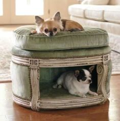 Dog/cat bed. Layla would love the little posh puppy cave