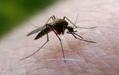 192. Att göra eget myggmedel