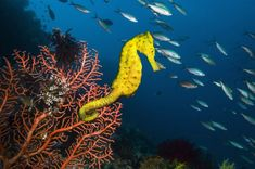 Image result for seahorse