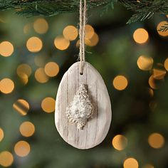 Driftwood Seashell Ornament | Kirklands
