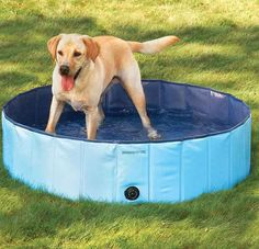 Is your dog too dirty to allow in your pristine pool? Buy him one of his own.