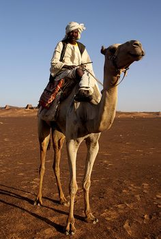 Sudanese man with camel