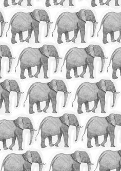 elephant, wallpaper, and background afbeelding