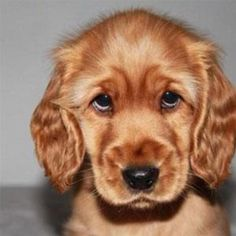 Check out pictures we've gathered of dogs with adorable puppy eyes!