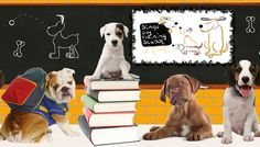 Bingo Dog Training School Central Coast offers friendly, fun and effective training for dogs and owners alike.