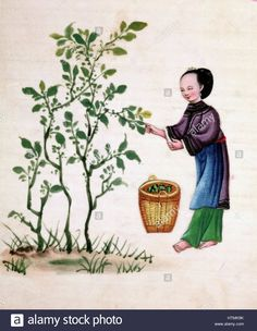 Gathering mulberry leaves to feed silkworms. Chinese painting on rice paper. 19th century Stock Photo