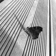 Butterfly on strings Chiffon Shirt, Chiffon Tops, Long Hoodie, Wood Print, Zipper Pouch, Laptop Sleeves, Decorative Throw Pillows, Art Boards, Duvet Covers