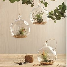 3 x hanging glass ball vases for $39.