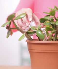 If your plants look like they need a boost, change how you water them.