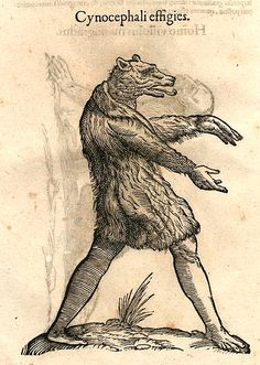 Ulisse Aldrovandi, Monstrorum Historia (History of Monsters) late 1500s, a compendium of monstrous and human hybrid races. Here shown are the Cynocephali, dog-head humans said to inhabit a island in the far East. Not monsters in the sense of inspiring horror or fear; these monstrous races were emblems of and unknown world and God's ability to create wondrous creatures.
