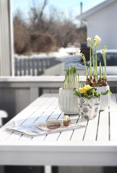 Spring + Flowers