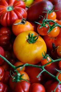 Tomato Garden, Garden Tomatoes, Zucchini Salsa, Fresh Tomato Salsa, Salsa Recipe, Yummy Appetizers, Pints, Vegetables, Sweet