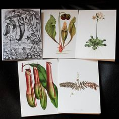 Win a free set of carnivorous plant stationary cards!