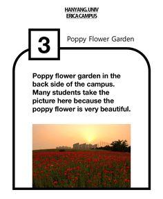 Poppy Flower Garden in ERICA campus   #garden #flower #poppy #erica #hanyang #university #ecofriendly #campus