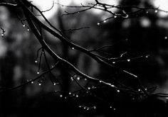 Josef Sudek  Tree branch with water drops  1960s http://musessquare.blogspot.com/
