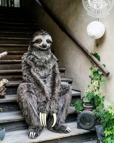 Realistic three toed sloth costume made by Karoline Hinz Jungle Animals, Baby Animals, Cute Animals, Fluffy Animals, Jungle Costume, Realistic Costumes, Body Builder, Rumble In The Jungle, Softies