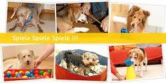 SPASS-MIT-HUND | Die Seiten wider die Langeweile und den grauen Hund-Alltag