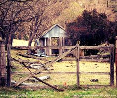 My Notes from New England: Tenterfield Top 10 - #10 Beautiful old country scene off Mt McKenzie Road - if only walls could talk, I would love the tales they could tell  Hard to believe I arrived in Tenterfield almost 4 1/2 years ago.  In some ways it seems like the blink of an eye, in others it seems like I have been here forever.  I initially came to Tenterfield thinking that we would probably return to the Coast, but after 6 months I decided to buy a cottage all of my own, and I knew I had