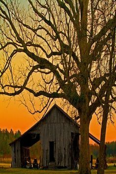 A árvore e o celeiro. Fotografia: Cathy no Indulgy. Country Barns, Country Life, Country Living, Country Roads, Farm Barn, Old Farm, Barn Pictures, Barns Sheds, Country Scenes