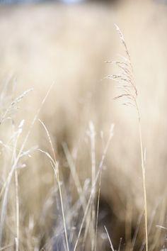 more grass