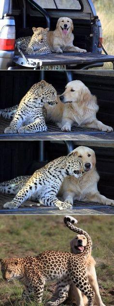 Unlikely friends! So sweet!!!