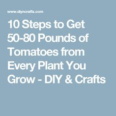 10 Steps to Get 50-80 Pounds of Tomatoes from Every Plant You Grow - DIY & Crafts