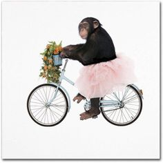 Trademark Fine Art 'Monkeys Riding Bikes #1' Canvas Art by J Hovenstine Studios, Size: 24 x 24, Multicolor