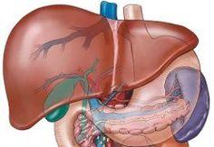 Karaciğer hastalıklarında beslenme ve tüketilmesi önerilen besinler