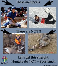 why hunting should not be a sport Stop trophy and big game hunting - animal cruelty should not be a sport 3,604 likes 6 talking about this a protest against trophy hunting, especially.