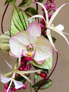 pme cymbidium orchids - Google Search