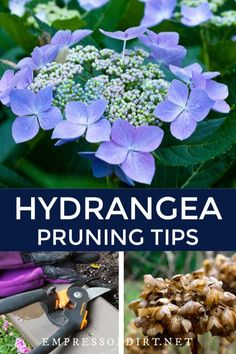 Tropical Garden Landscaping Some new gardeners think they need to prune when they just want to deadhead to remove old flowers. Find out which two hydrangea species do need pruning and those that do not. Pruning Hydrangeas, Hydrangea Landscaping, Garden Landscaping, Landscaping Ideas, When To Prune Hydrangeas, Tropical Landscaping, Tropical Garden, Garden Yard Ideas, Easy Garden