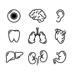 Nine icons of humans organs by Evgeniy on @creativemarket