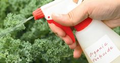 From Your Garden to Your House DIY Pest Control Is Easier Than You Think (Recipes Included)