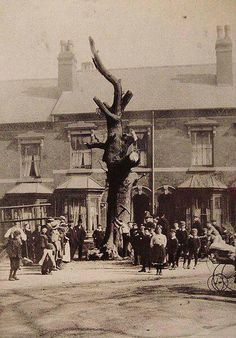 The felling of the Selly Oak 1909
