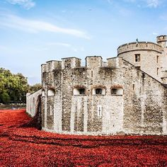 #travelgram Sea of Poppies Blood Swept and Tears, Tower of London. . . [ #sharetravelpics #travelphotography #vscocam #travelstoke #londontower #wanderlust #photooftheday #igscglobal #colors_of_day #memorial #mthrworld #beautifuldestinations #travelandleisure #cityscape #natgeo #natgeotravelpic #natgeoyourshot #lonelyplanet #bbctravel #cnntravel #canonasia #seduniagram ]