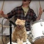The best banding ever.hahahah - your daily dose of funny cats - cute kittens - pet memes - pets in clothes - kitty breeds - sweet animal pictures - perfect photos for cat moms Cool Cats, I Love Cats, Cute Kittens, Cats And Kittens, Funny Kitties, Crazy Cat Lady, Crazy Cats, Animal Pictures, Funny Pictures