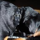 Do you have a big dog and always wanted one of those nice looking leather-studded collars except you don't really want to pay the $100+ (or just can't afford to pay ...