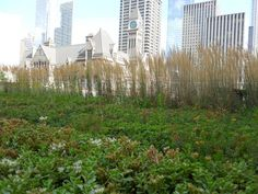 ARTICLE: What Cities Can Learn From Toronto's Green Roof Policy