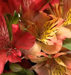 lajoiedesfleurs.fr alstroemeria pantone fleur couleur