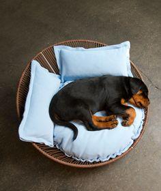 The perfect dog bed! Das perfekte Hundebett!