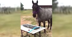 Horse Discovers Her Passion For Playing The Keyboard via LittleThings.com